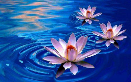 Destinul tău este să duci o viaţă minunată-Puterea Supremă